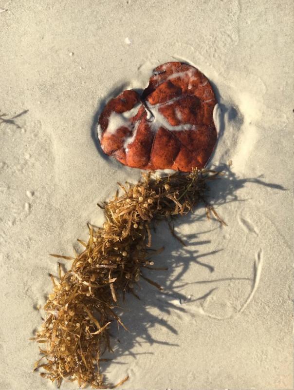 Beach Hiku 1